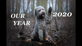 Our year 2020 | lagotto romagnolo