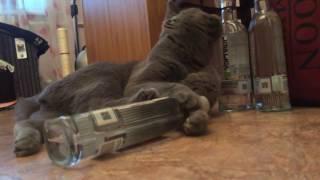 Пьяный кот Тимофей прикол