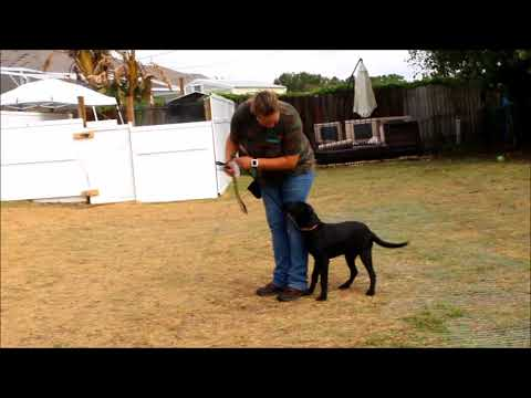 Roxy 1 week obedience academy update