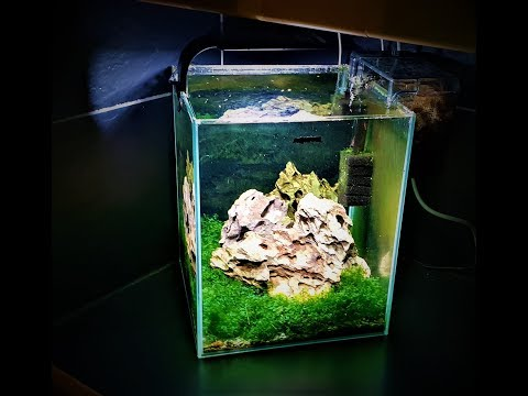Beautiful Nano Aquarium / Easy Aquascape for Beginners