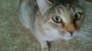 ВИКИ у бабушки с дедом в гостях! Мама моего кота Лунтика кошка Муська!