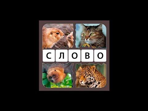 4 фото 1 слово ответы на все уровни игра Четыре картинки