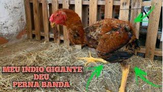 ÍNDIO GIGANTE ! FAMOSA PERNA BAMBA