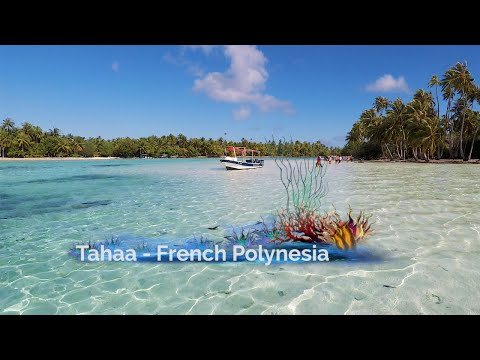 Coral Gardens Drift Snorkeling Tahaa French Polynesia Windstar Cruises