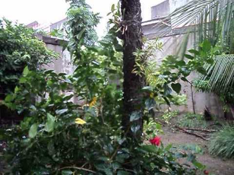 "Typhoon ""YOLANDA""/Haiyan hit Philippines Cebu City (11/8/2013)"