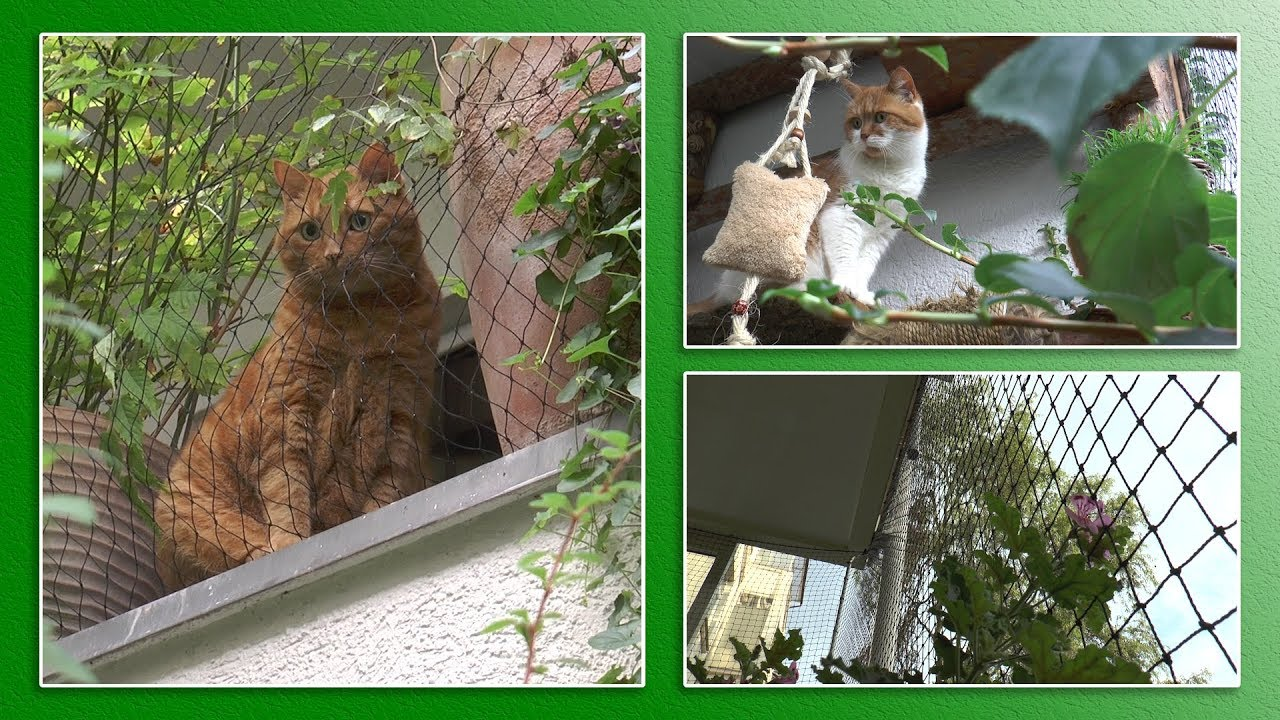 Katzengerechter Balkon Tierheimtv Informiert Tierheim Hannover