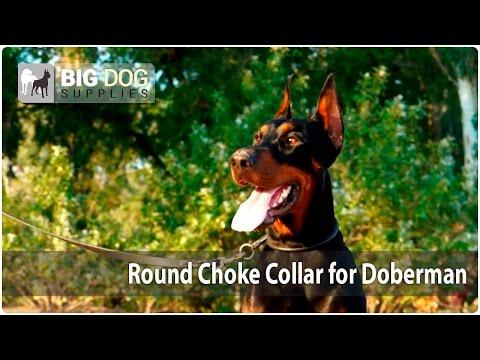 Amazing Doberman Walking on the Beach in Classic Design Dog Collar