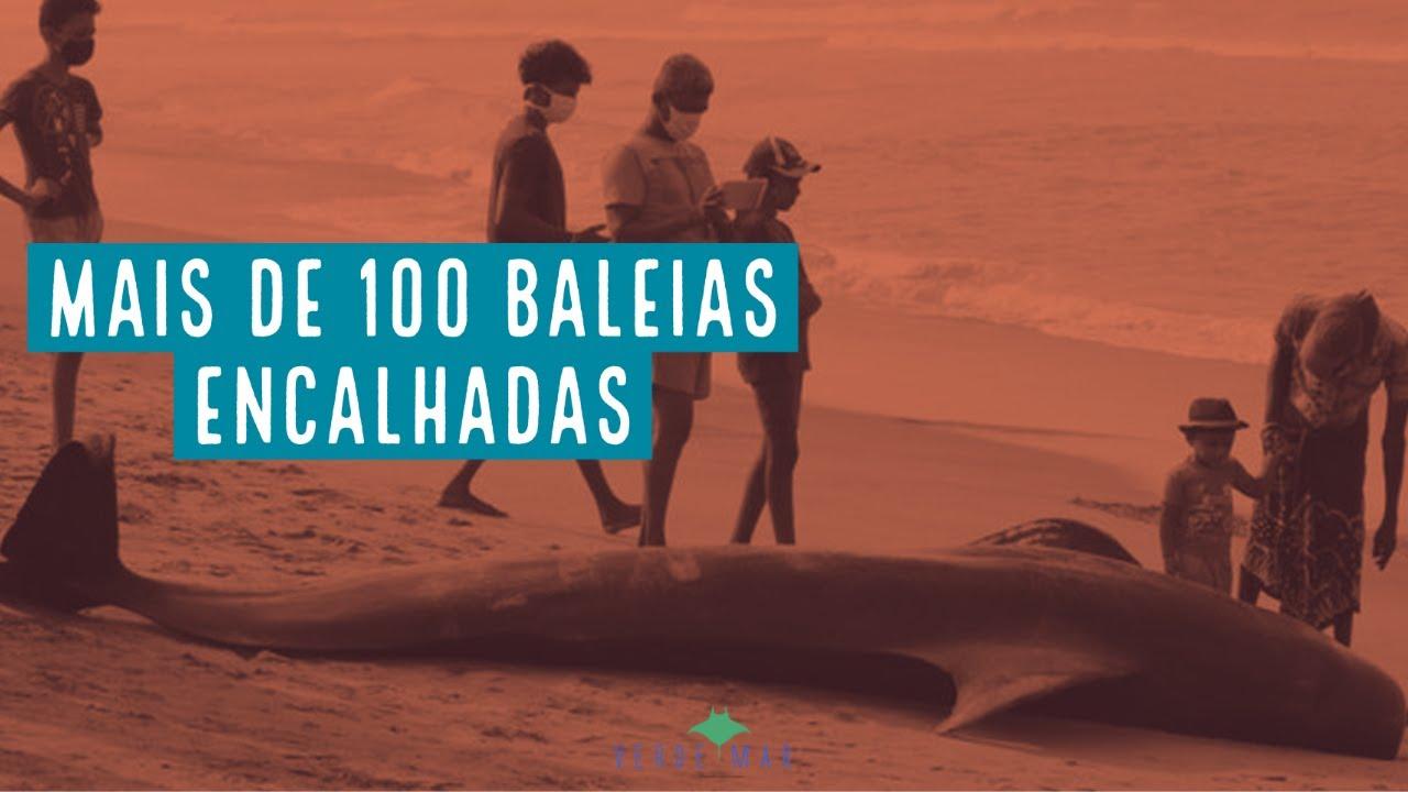 Mais de cem baleias encalhadas no Sri Lanka