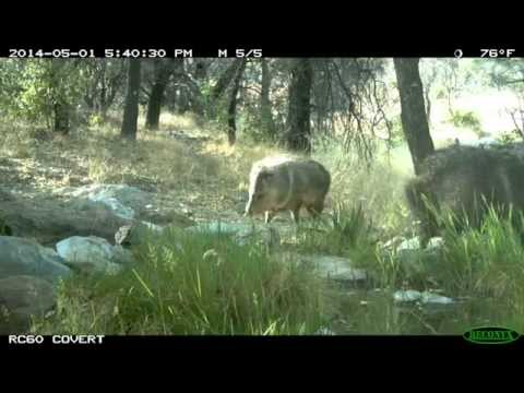 Three Day Wildlife Camera Time-lapse