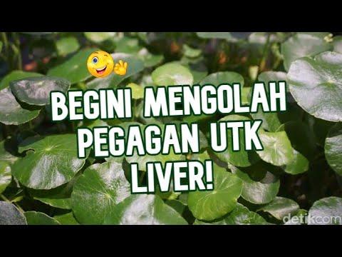 obat-liver-paling-ampuh-!!!-cara-menyembuhkan-liver-secara-alami-|-cara-moyang
