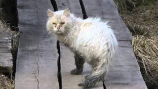 Самый жалкий бездомный кот на свете