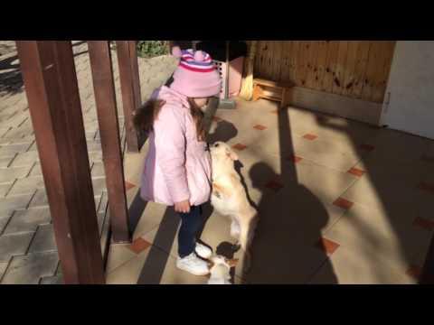Влог Гуляем у бабушки * Моя собака Лада