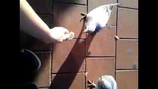 Güvercinler ile ilk yaklasimim =) / Tauben füttern war noch nie so schööön