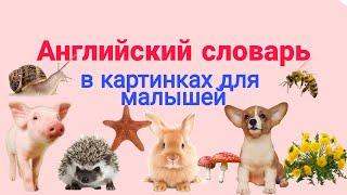 Английский детям. Английский словарь для малышей в картинках. English for kids.