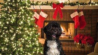 Fox News: War on Christmas Led by Obama's Dog Bo!