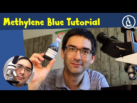 🔬 How To Stain Cells With Methylene Blue | Amateur Microscopy