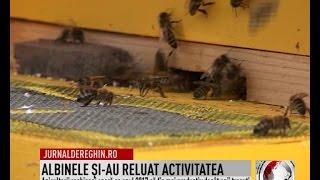 ALBINELE ŞI-AU RELUAT ACTIVITATEA (2017 03 22)