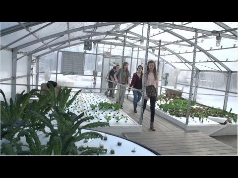 In Milwaukee, connecting schools to urban farming through aquaponics