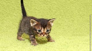 Смешные и милые котята!Первые шаги!Улыбнемся!