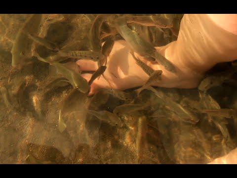Загрузить самые смешные рыбы видео - добавил DolmakimiOglan