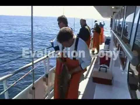 Voyager Cod Trip Part 3