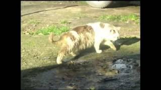 Кот напился валерьянки тест видео Canon A430