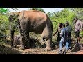 Humble elephant with a tumor in his leg gets treated by a Minister in charge of Wildlife