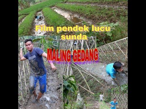 Film Pendek Sunda, MALING GEDANG SI GONDRONG