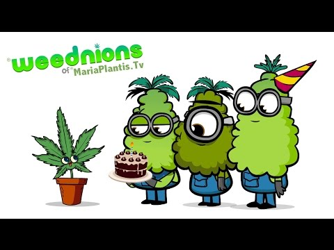 "The WeedNions  ""Love Weed"""