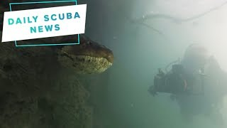 Daily Scuba News - Diving with An Anaconda