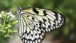 Video 20 Animals That are Black and White download MP3, 3GP, MP4, WEBM, AVI, FLV Juni 2018