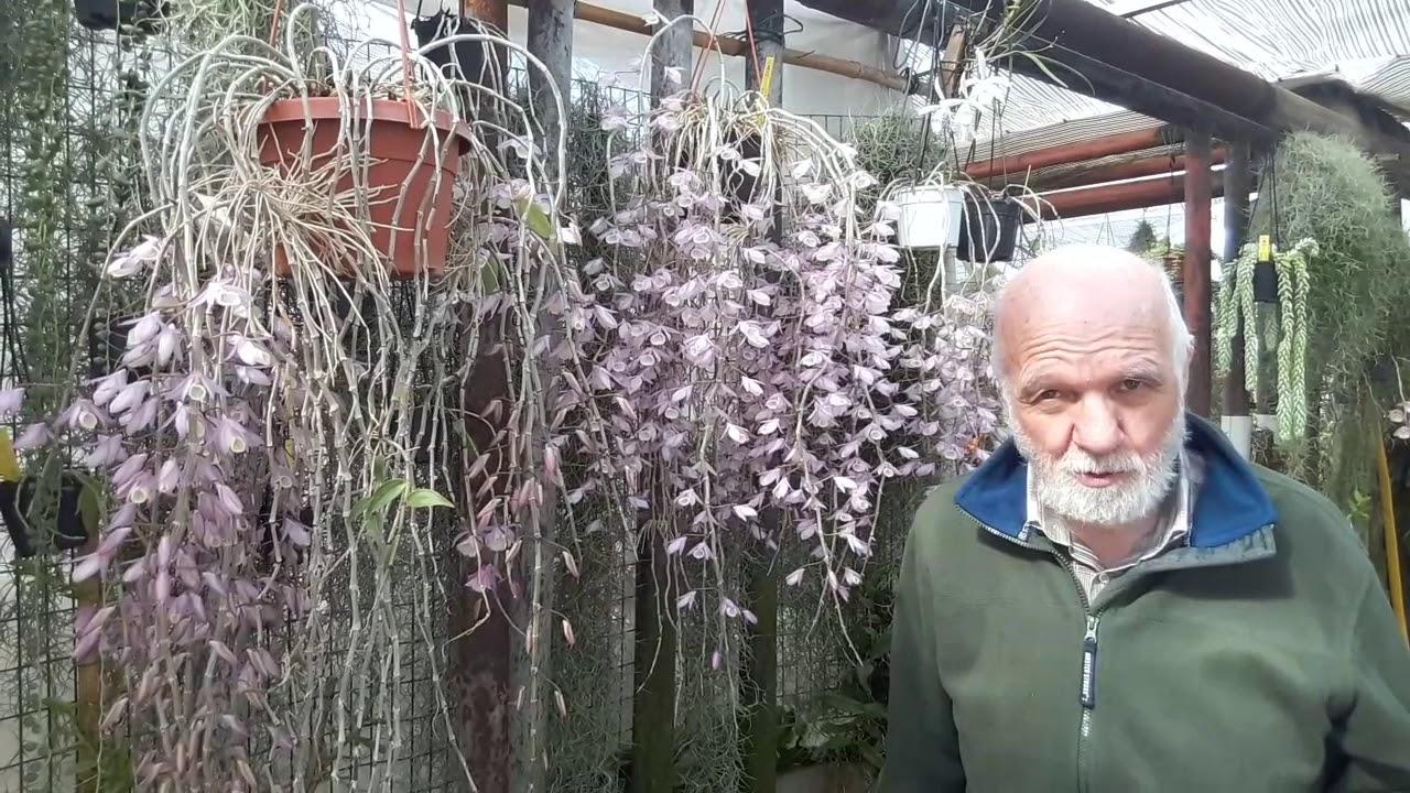 Bagnare Le Orchidee Con Lo Spruzzino Si Può Fare O è