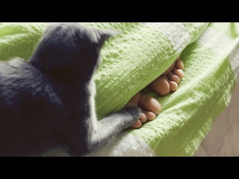 Funny cats waking up owners  Funny cat compilation
