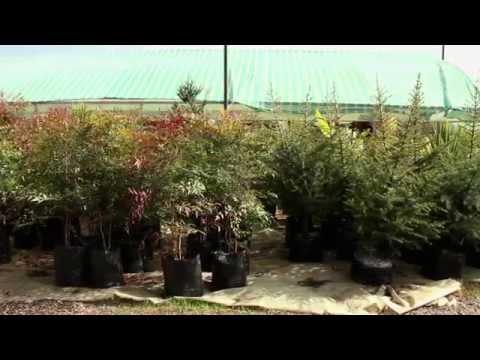 Agroflor Jardín y Florería