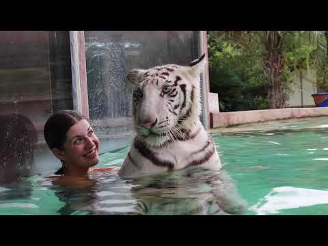 SWIMMING with my 200lb TIGER buddy