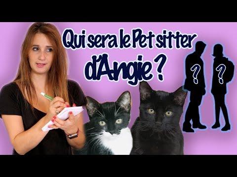Comment Recruter Un PETSITTER Pour Ses Chats ?- ANGIE LA CRAZY SERIE