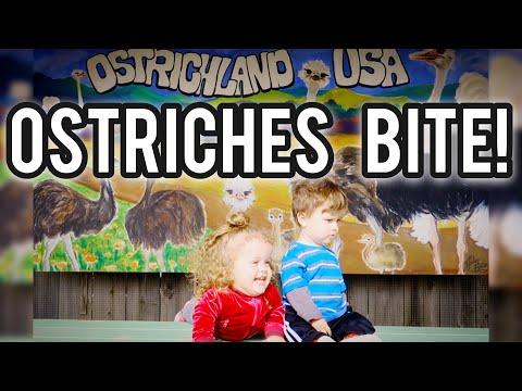 Ostriches Bite! Vlog 174 - OstrichLand USA