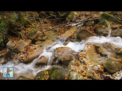 10 HOURS of Waterfall Sounds - White Noise for Tinnitus Relief, Relaxation, Meditation & Deep Sleep