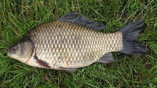 Ловля карася на хлебный мякиш с использованием натурального ароматизатора(Уроки рыбной ловля от профи., 2016-04-03T18:46:51.000Z)