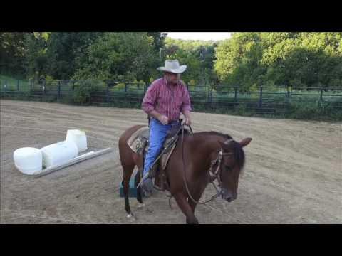 Working a high headed horse