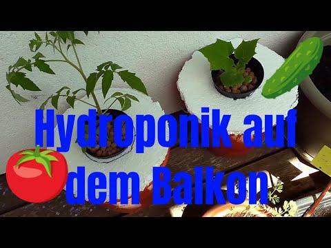 Gurken Und Tomaten In  Hydroponik Auf Dem Balkon