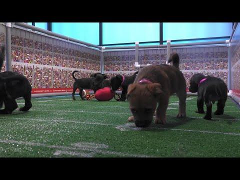 The Super Puppy Bowl