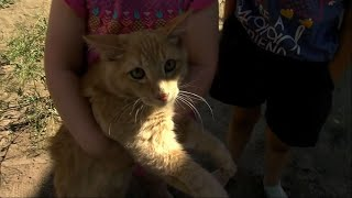 Cat Saved After Three Days Stuck on Utility Pole