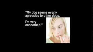 Dog Obedience  | Chilliwack | (604) 556-9966 | Urgent Dog Training