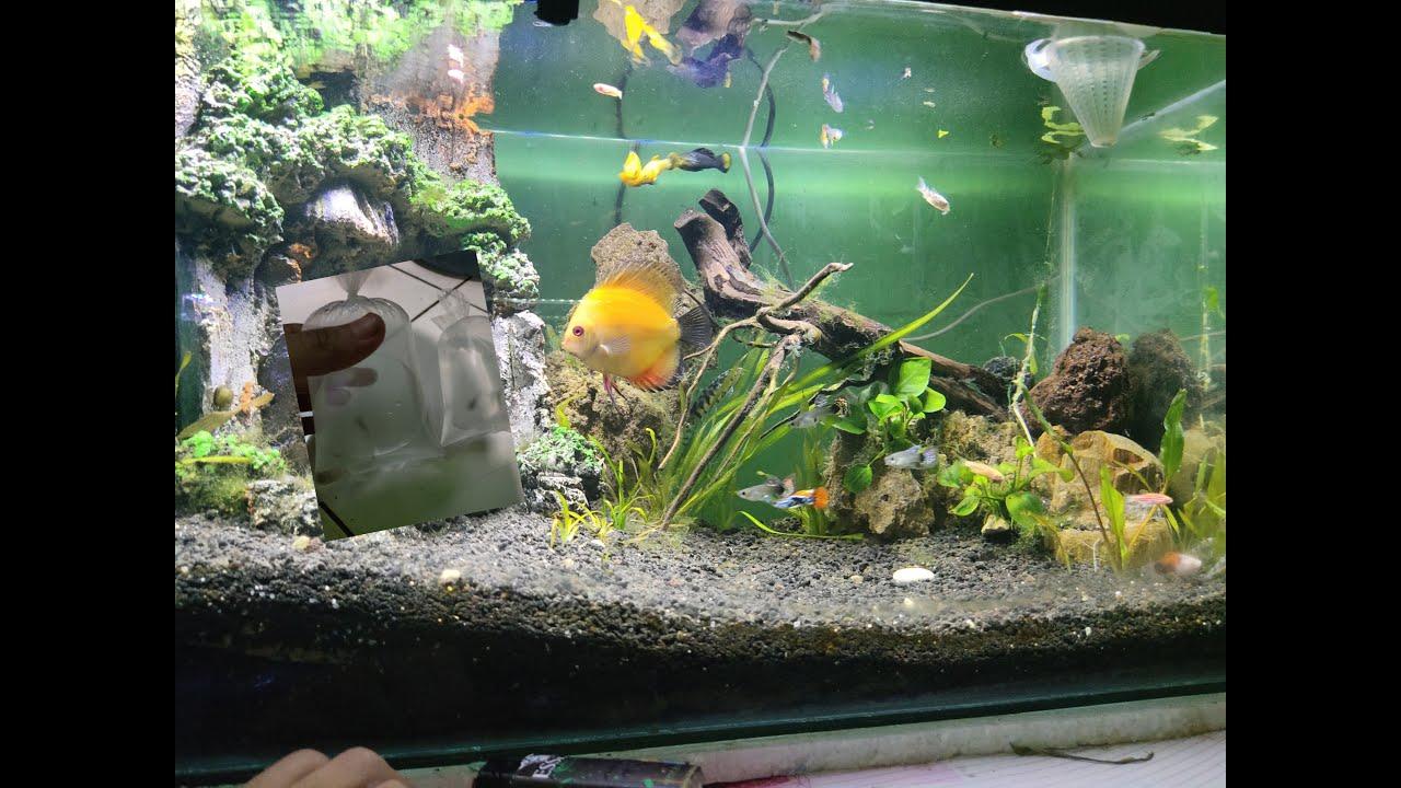 Masukin ikan pemakan alga,corydoras di aquascape biar ga ...
