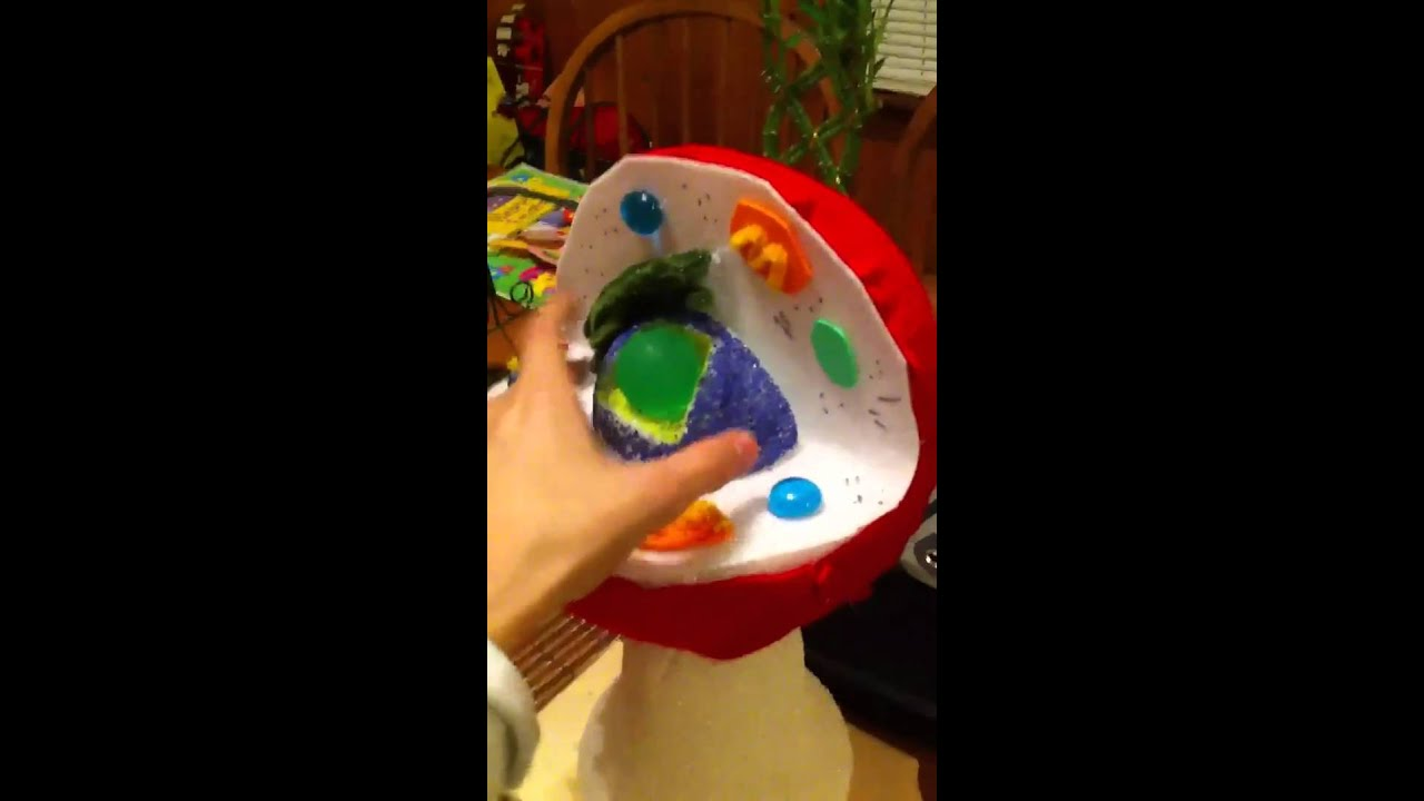 Animal cell project idea youtube