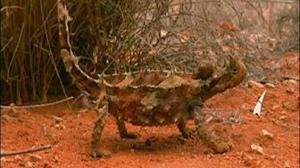 Australien - Land der Extreme (Doku)