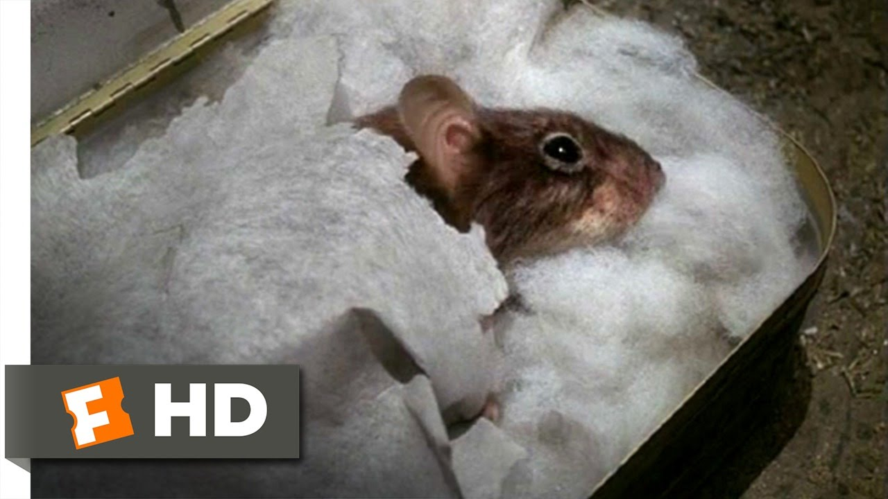 Download Mousehunt (2/10) Movie CLIP - Sleeping Mouse (1997) HD