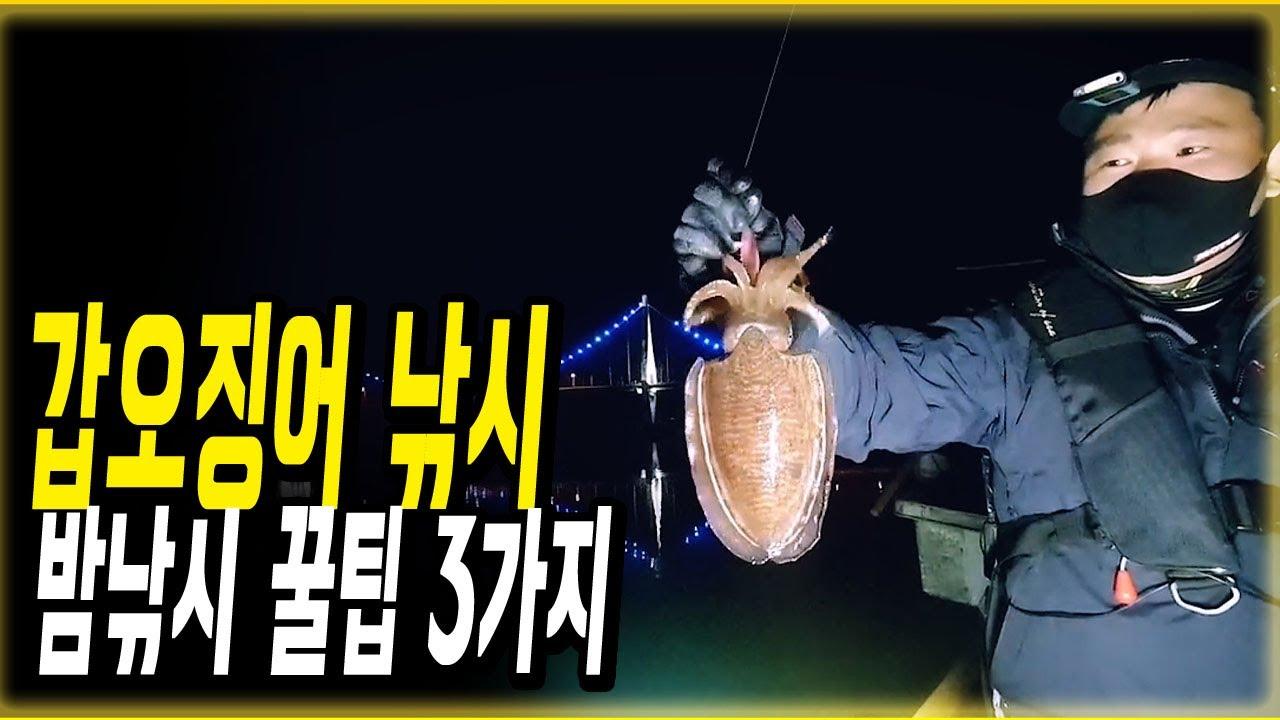 너무나 해로운 봄 갑오징어 낚시,방법만 알면 누구나 묵직한 손맛을 볼 수있다?!산란 갑오징어 밤낚시 꿀팁,포인트 및 루어낚시 장비 추천 및 바다낚시용품 추천(cuttlefish)