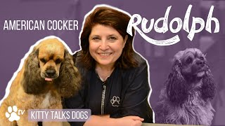 Kitty Talks Dogs: grooming Rudolph the American Cocker | TRANSGROOM
